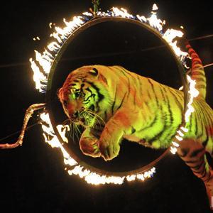 Цирки Ташлы