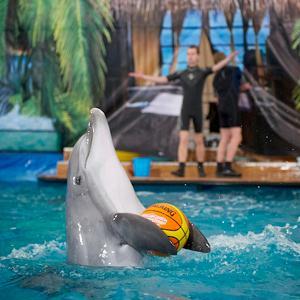 Дельфинарии, океанариумы Ташлы
