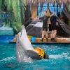 Дельфинарии, океанариумы в Ташле