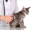 Ветеринарные клиники в Ташле
